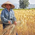 Recrutare personal asiatic in Agricultura